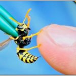 German Yellow Jacket Sting