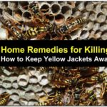 Killing Yellow Jackets Naturally