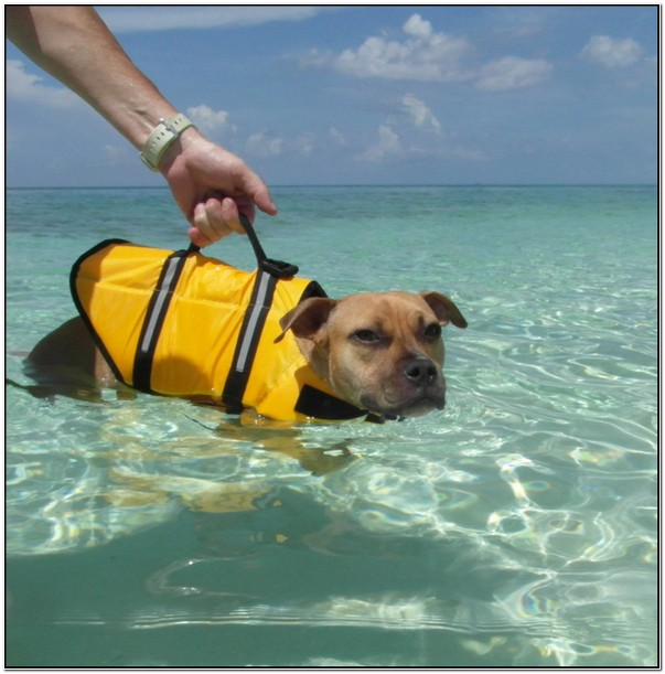 Shark Fin Dog Life Jacket Uk