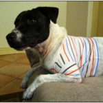 Thunder Jacket For Dogs Diy